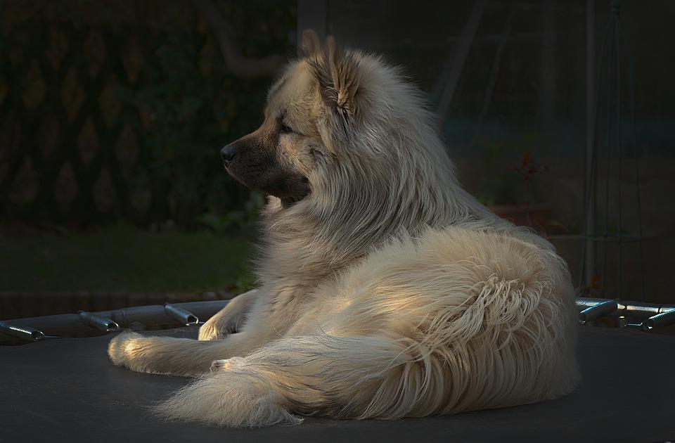 Pes na trampolíně