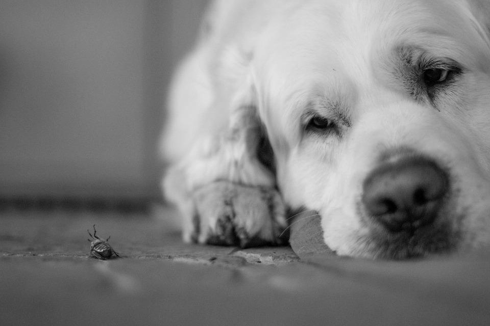 hmyz vedle psa
