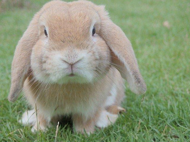 rozkošný králíček